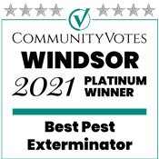 windsor best pest contorl
